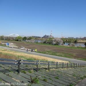 【お花見散歩その1】荒川河川敷の桜!宮城ゆうゆう公園の桜!