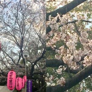 さくらまつり日記その1・・・「FOREST JAM SAKAE」栄大祭、今年は二日間とも快晴で例年以上の大盛況でした。「くじ、当たったよ!」のキッズ記念写真コラージュ載せました。