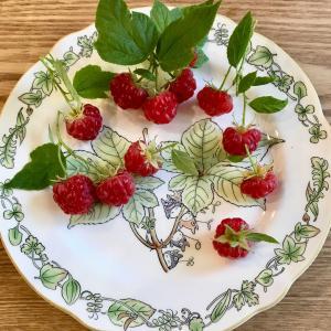 ラズベリー・りんご・柿・キウイが美味しい!