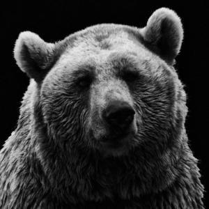 【なんJ好きな事件】三毛別ヒグマ事件とワンゲル部ヒグマ事件について