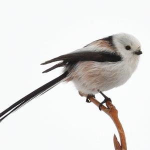 モエレの鳥たち 1/21 カラ類がたくさん