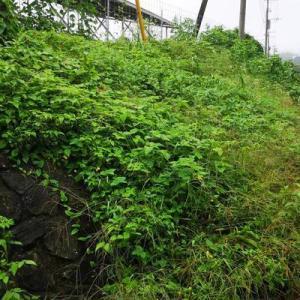 現地確認と草刈り(^^;)