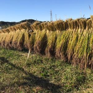 三連休は稲刈りと収穫祭と豪華な列車