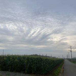 ロードムービーのような曇天