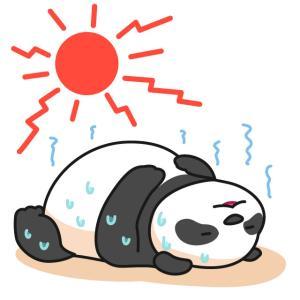 暑いのに この2週間は…