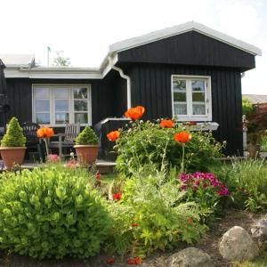 デンマーク家庭菜園(コロニーハーベ)での生活