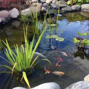 菜園場(コロニーハーベ)で自作の池つくり
