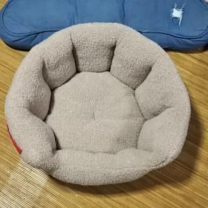 新しいベッド&クッション 雷ーーー!