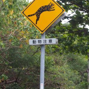 ブログ再放送 西表島、鳩間島