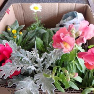 花と大福と超久しぶりのユニクロ