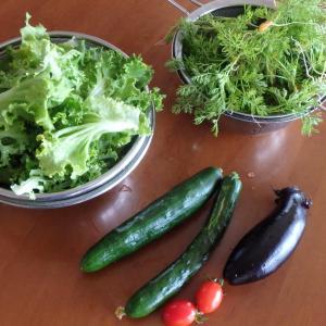 ナスときゅうりの初収穫、そして。。。暑い!!