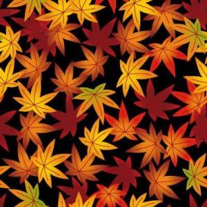 紅葉の柄の着物も、夏でも着てかまいません。