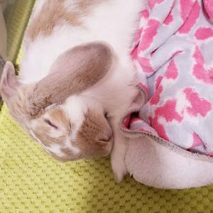 寝姿が愛しすぎる。