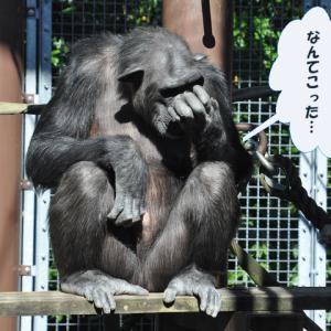 動物園 行きたいな