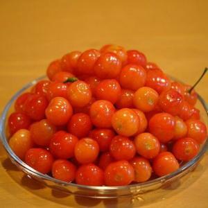 サクランボ(暖地桜桃)収穫・クリスマスローズ採種