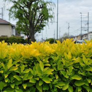 春の散歩 ② 草花