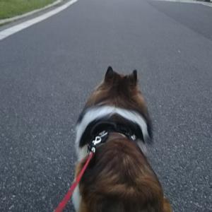 葛西臨海公園のお散歩❗️
