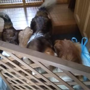 お庭ランって素敵❗️JKCの犬舎登録完了