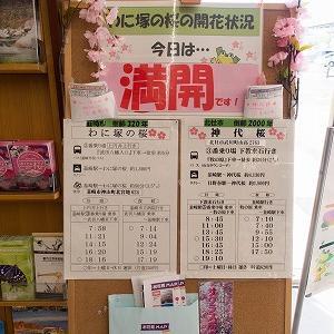 わに塚の桜(山梨県韮崎市)