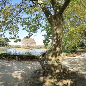 迷彩柄の木 @昭和記念公園