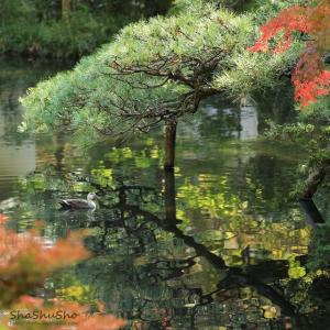 小さな池に浮かぶ小舟 @深大寺
