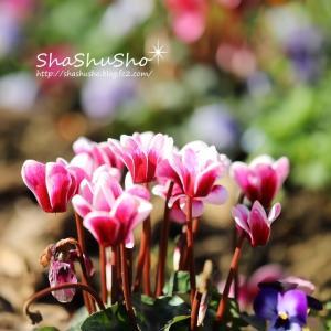 色とりどりの花に溢れる花壇