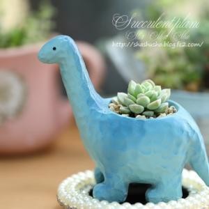 モミジの滝#2 ღ多肉:恐竜の鉢#2