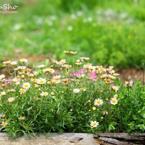 ほのぼの花畑 &多肉写真