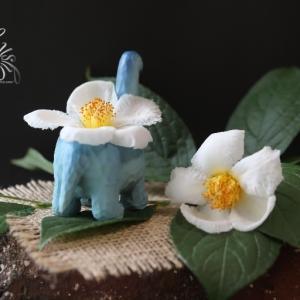儚い美しさ *娑羅樹の花* &多肉写真