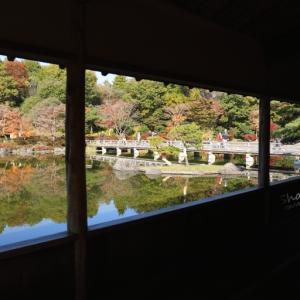日本庭園の池面に浮かぶ逆さ紅葉