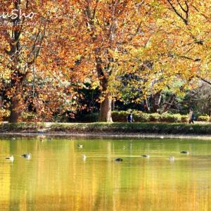 零れ落ちる 秋色のグラデーション