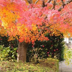 橙色の樹 *郷土の森博物館*