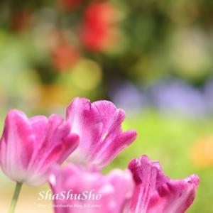 光風と春の彩