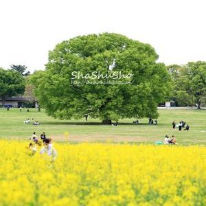 昭和記念公園*風景