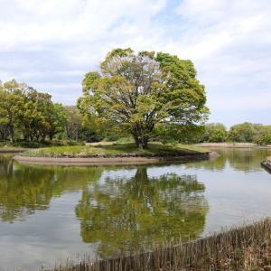 水鳥の池に浮かぶ大欅 ②