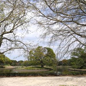 水鳥の池に浮かぶ大欅 ④