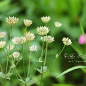 名前も知らぬ可憐な花