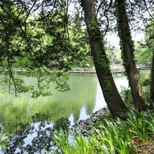 みどりの水面を包む新緑