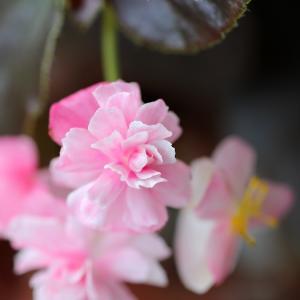 温室に咲く可憐な花