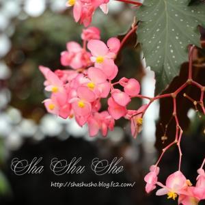 多彩な魅力を誇る花