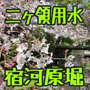 グループライド:最初からクライマックス! 二ヶ領用水宿川原堀の幻想郷と多摩地区の花見ライド