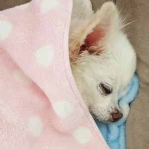 可愛い寝顔(親バカですが~)
