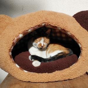 猫の中に住む猫