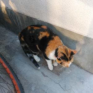 何かを待つ地域猫