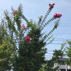「聲の形」を見ながら書いてます 上京区柏清盛町970-75のお地蔵様