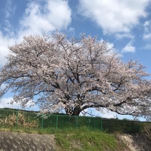 ころなで自粛中でも空はきれいでした  下京区新開町397のお地蔵様