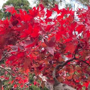 京都の隣りに奈良があって本当によかった  下京区西七条東御前田町10-1のお地蔵様