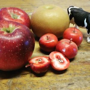 いよいよりんごの季節です。