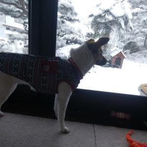 一転、雪!