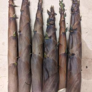 竹の子 その2